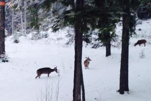 Deer at Lodge