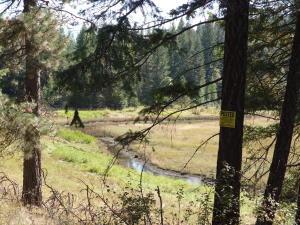 Meadow/Seasonal Stream