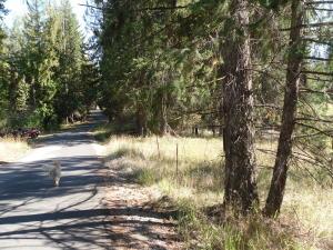 Elliot Bay Road (paved)