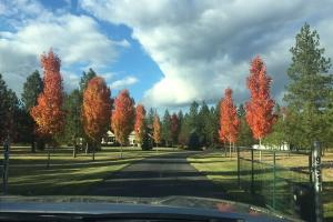 Beautiful trees lining the driveway
