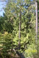 Grove of cedar