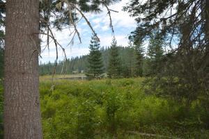 Overlooking meadow