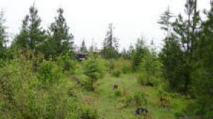 2661 E LOWER PASTURE RD, Harrison, ID 83833