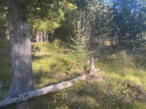 NNA Adams St, Spirit Lake, ID 83869