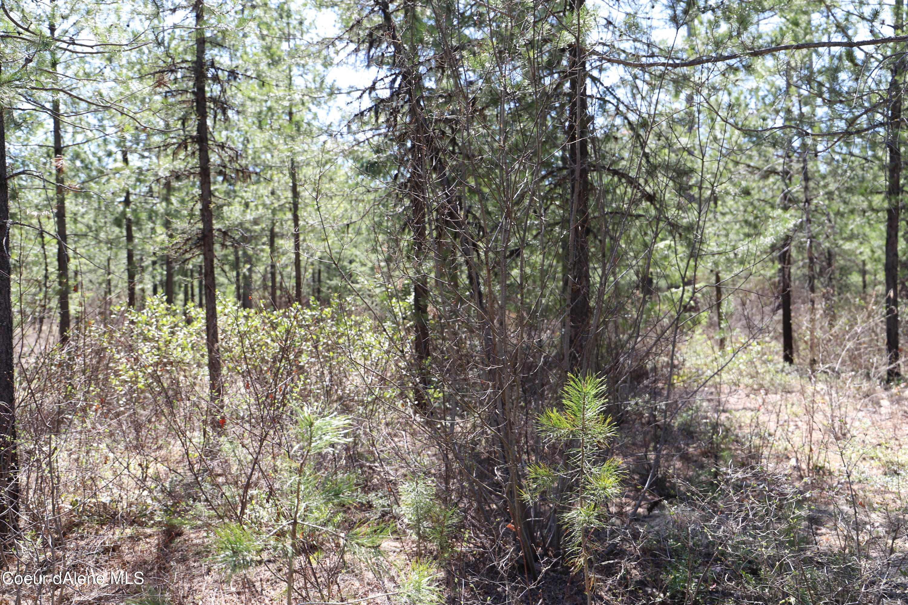 Rare almost 2 full acres on the outskirts of Spirit Lake.  Treed level lot ready to build as you see fit.  No HOA and NO CC and R's