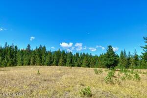 Peaceful Open Pasture Land