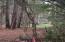 3992 Colonel Vanderhorst Circle, Mount Pleasant, SC 29466