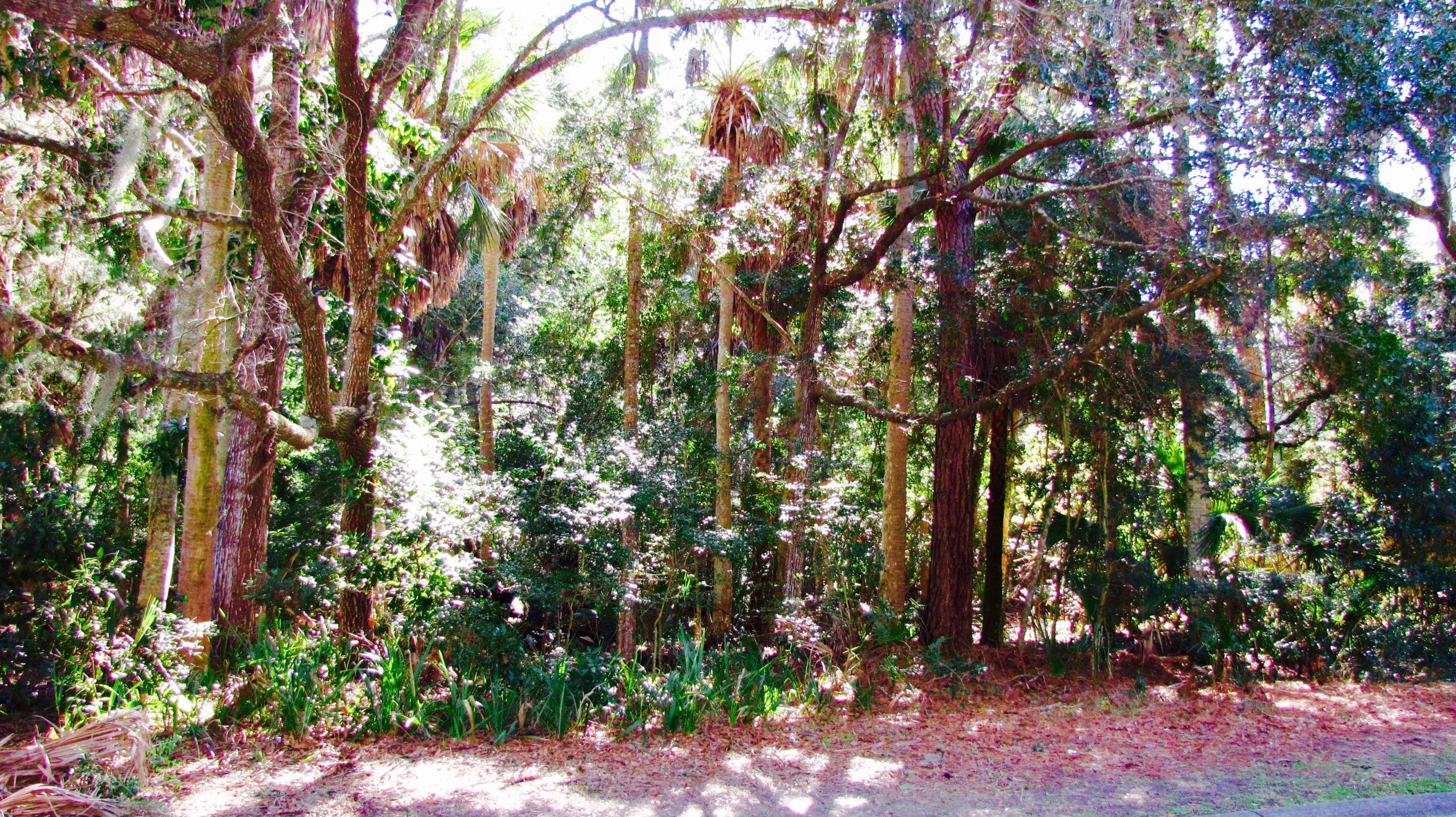 2645 Seabrook Island Road Johns Island, SC 29455