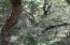 366 Pelican Flight Drive, Dewees Island, SC 29451