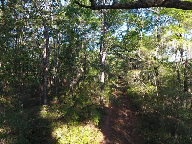None Lots For Sale - 2952 Bohicket, Johns Island, SC - 20