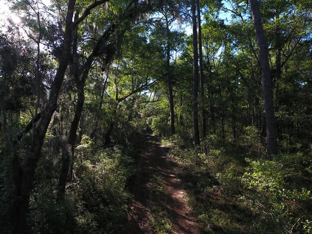 None Lots For Sale - 2952 Bohicket, Johns Island, SC - 21