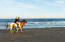 horseback ride on the beach, from the Seabrook Island Equestrian Center