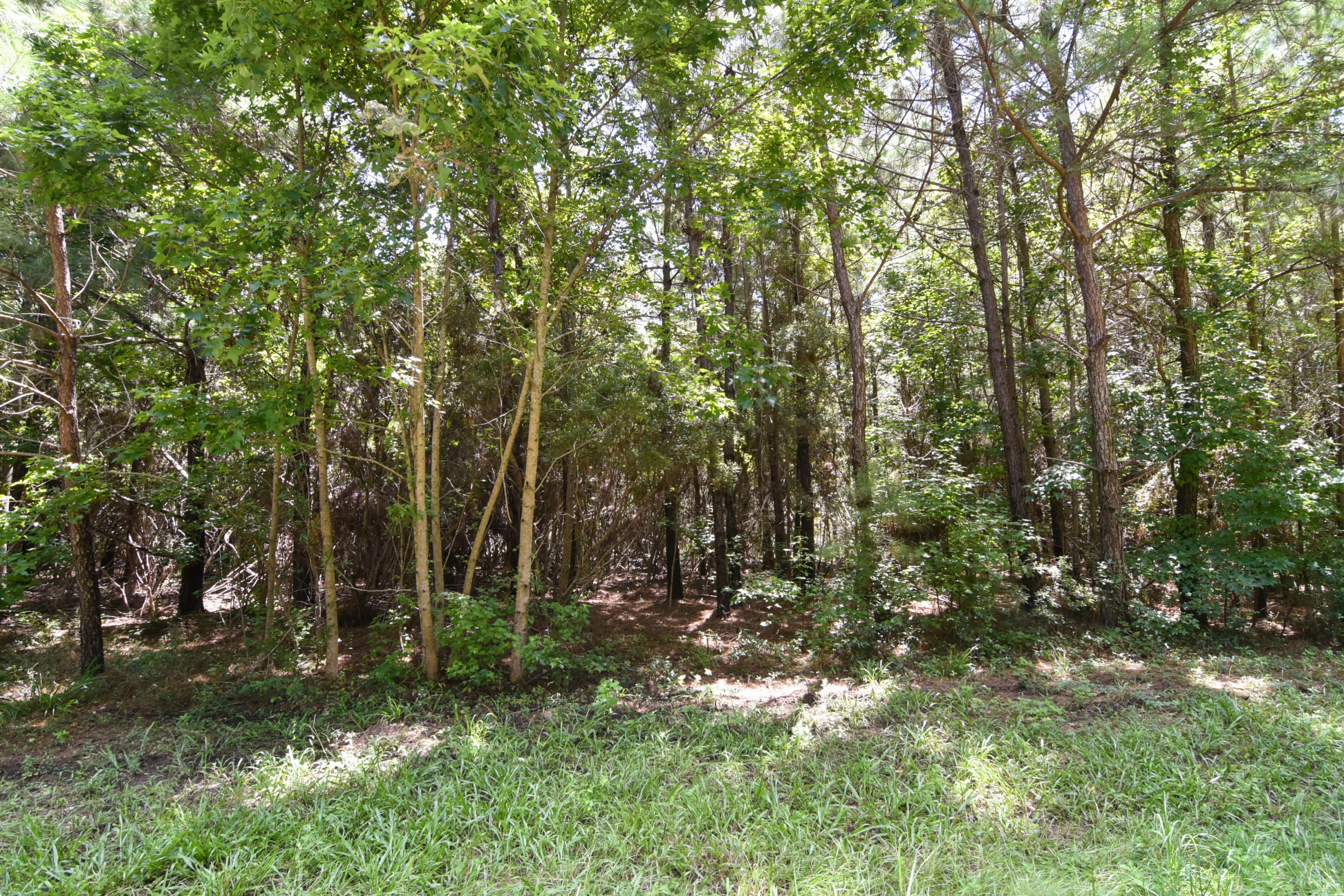 None Lots For Sale - 2630 Bryans Dairy, Johns Island, SC - 3
