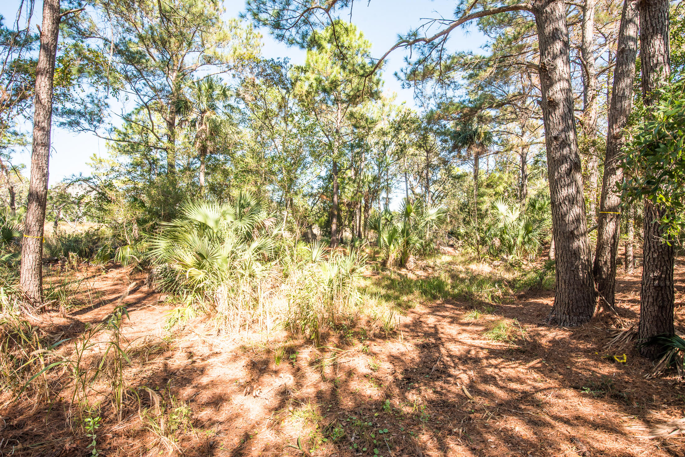 Wild Dunes Lots For Sale - 6823 Back Bay, Isle of Palms, SC - 0