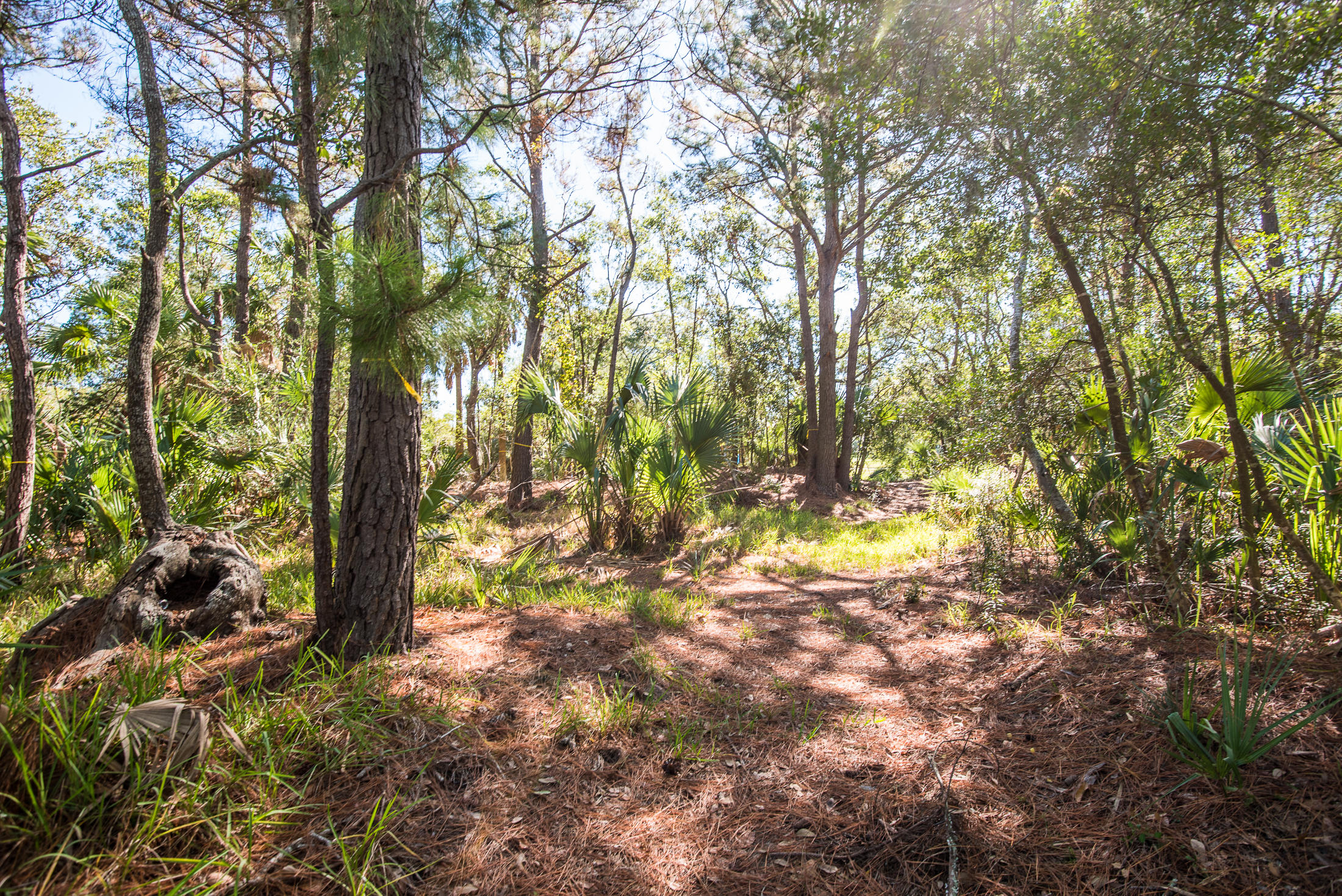 Wild Dunes Lots For Sale - 6823 Back Bay, Isle of Palms, SC - 17