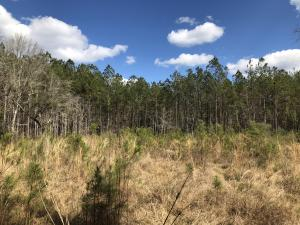 Clearing for homesite