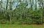 Forest & Privacy behind yard