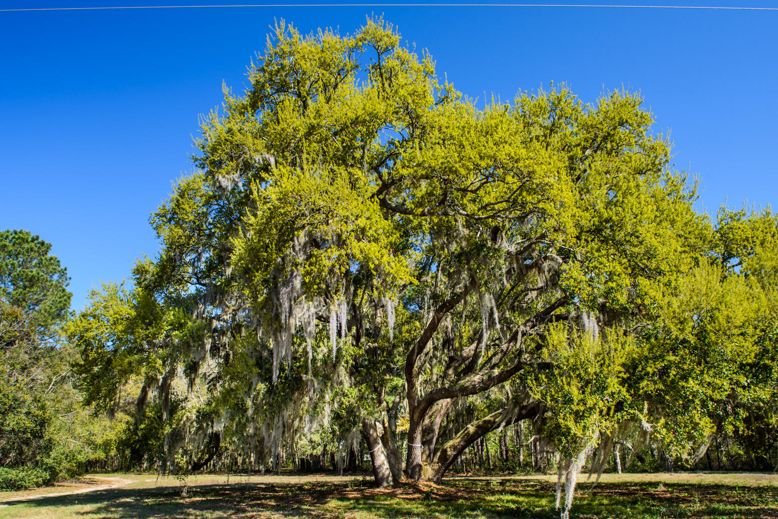 Lighthouse Point Lots For Sale - 940 Joe Rivers, Charleston, SC - 18
