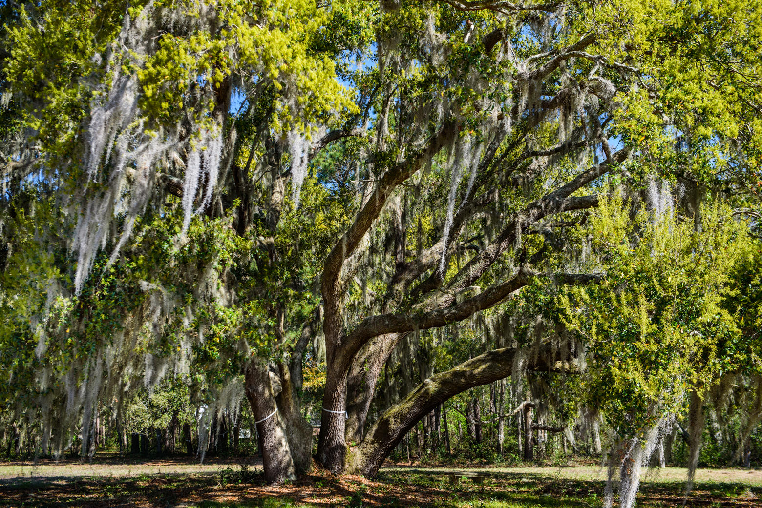 Lighthouse Point Lots For Sale - 940 Joe Rivers, Charleston, SC - 35