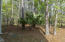 Wooded rear area