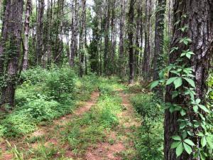 0 Boy Scout Road, Wadmalaw Island, SC 29487