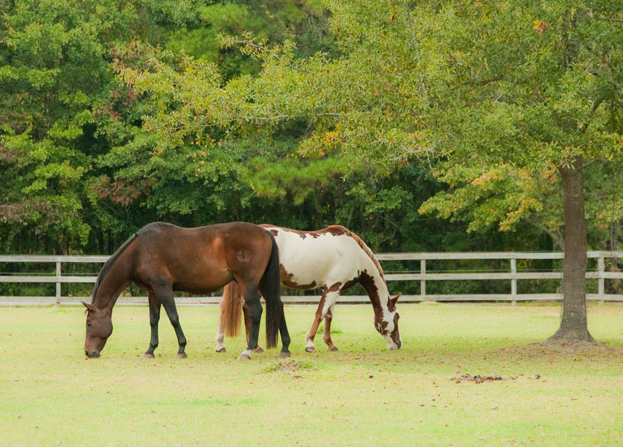 211 Sea Horse Lane Huger, SC 29450