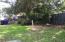 Back yard