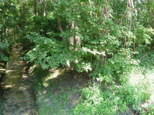 Pandora Drive Goose Creek, SC 29445