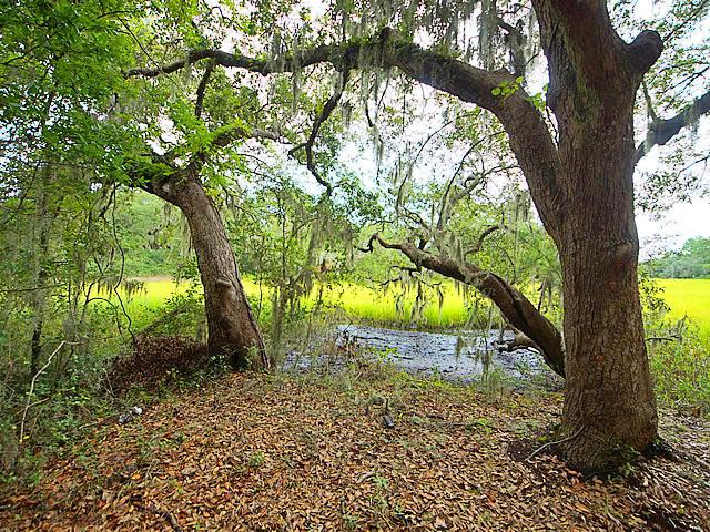 Stiles Point Plantation Homes For Sale - 693 Whispering Marsh, Charleston, SC - 26