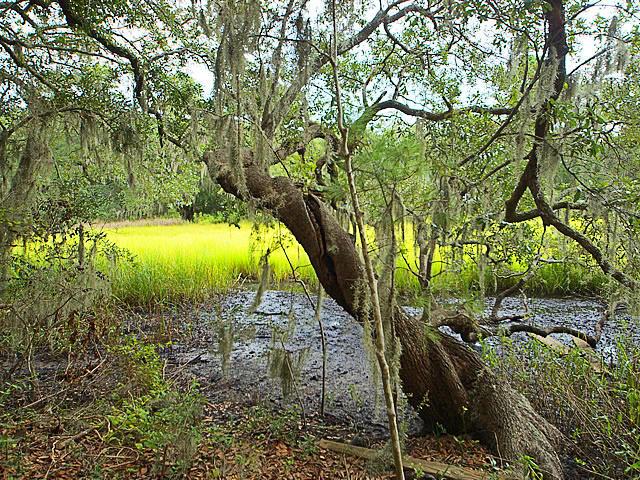 Stiles Point Plantation Homes For Sale - 693 Whispering Marsh, Charleston, SC - 25