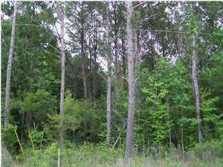 Bear Swamp Road Johns Island, SC 29455