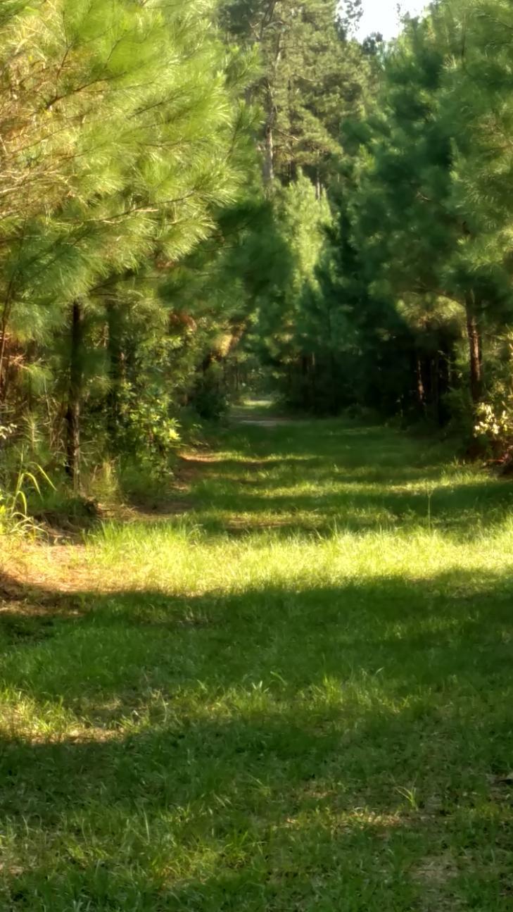 Tiger Corner Road Shulerville, SC 29453