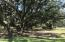 Your own Live Oak Paradise, just across the street