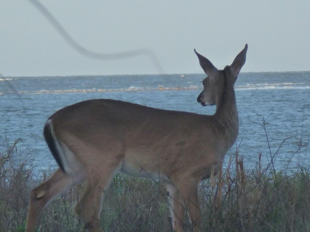 1332 Pelican Watch Villas Johns Island, SC 29455