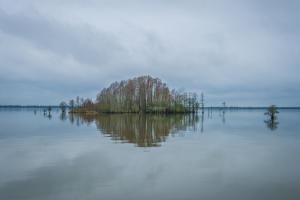 2050 W LAKE SHORE DRIVE, PINOPOLIS, SC 29469  Photo 13