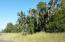 Sample of Oak Trees.