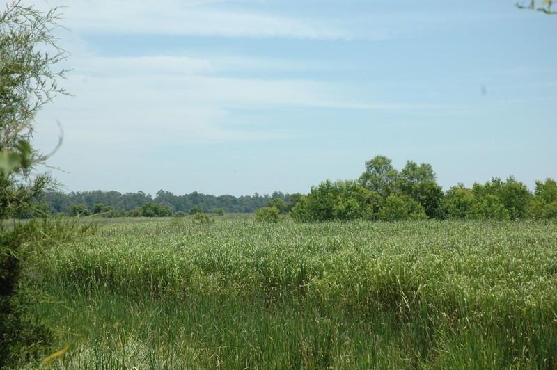 None Homes For Sale - 4206 Ashley River, Charleston, SC - 38