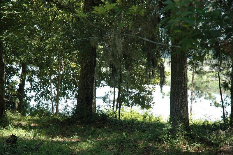 None Homes For Sale - 4206 Ashley River, Charleston, SC - 17