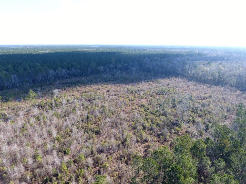 Marion Woods Trail Cordesville, SC 29434