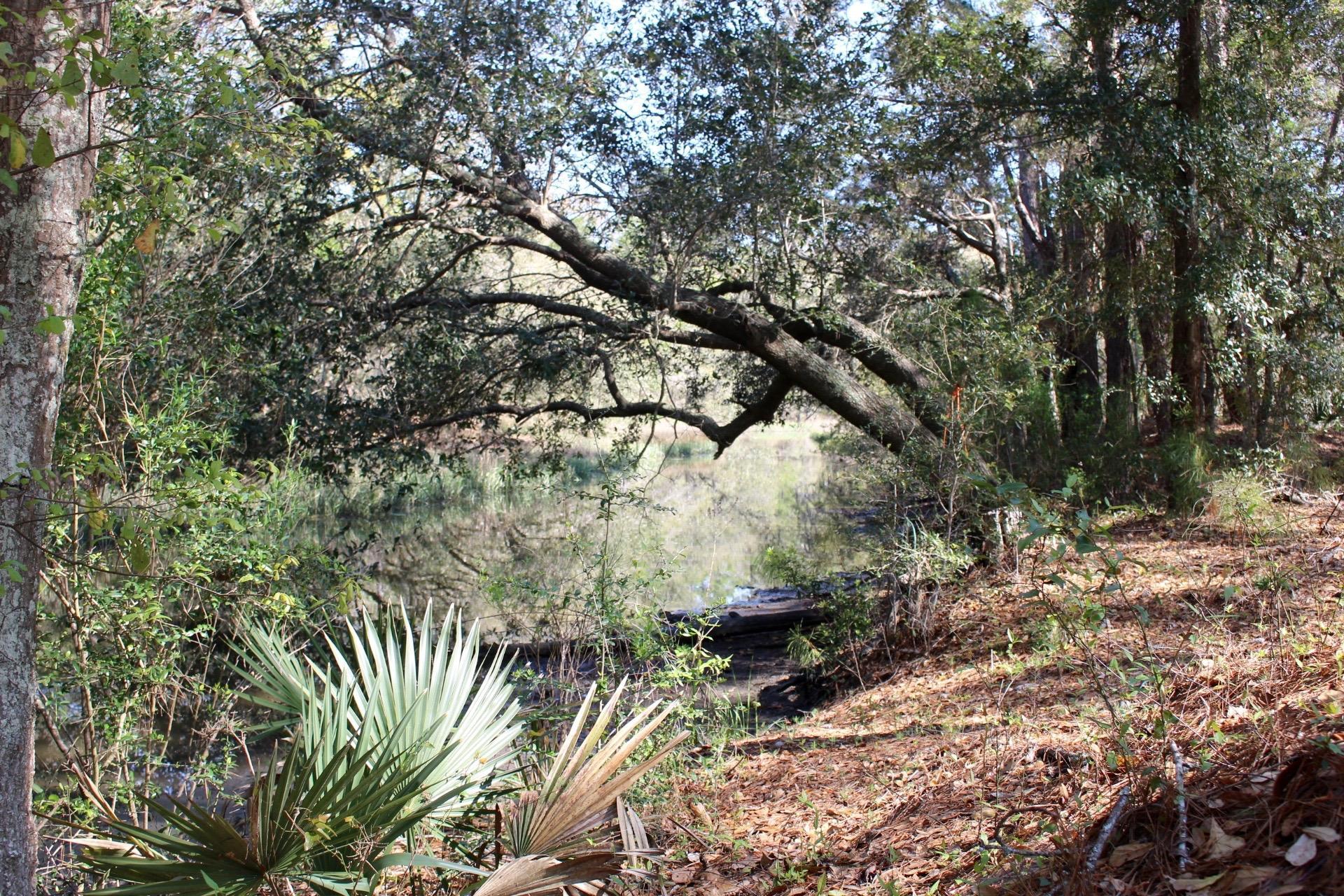 2798 Burden Creek Road Johns Island, SC 29455