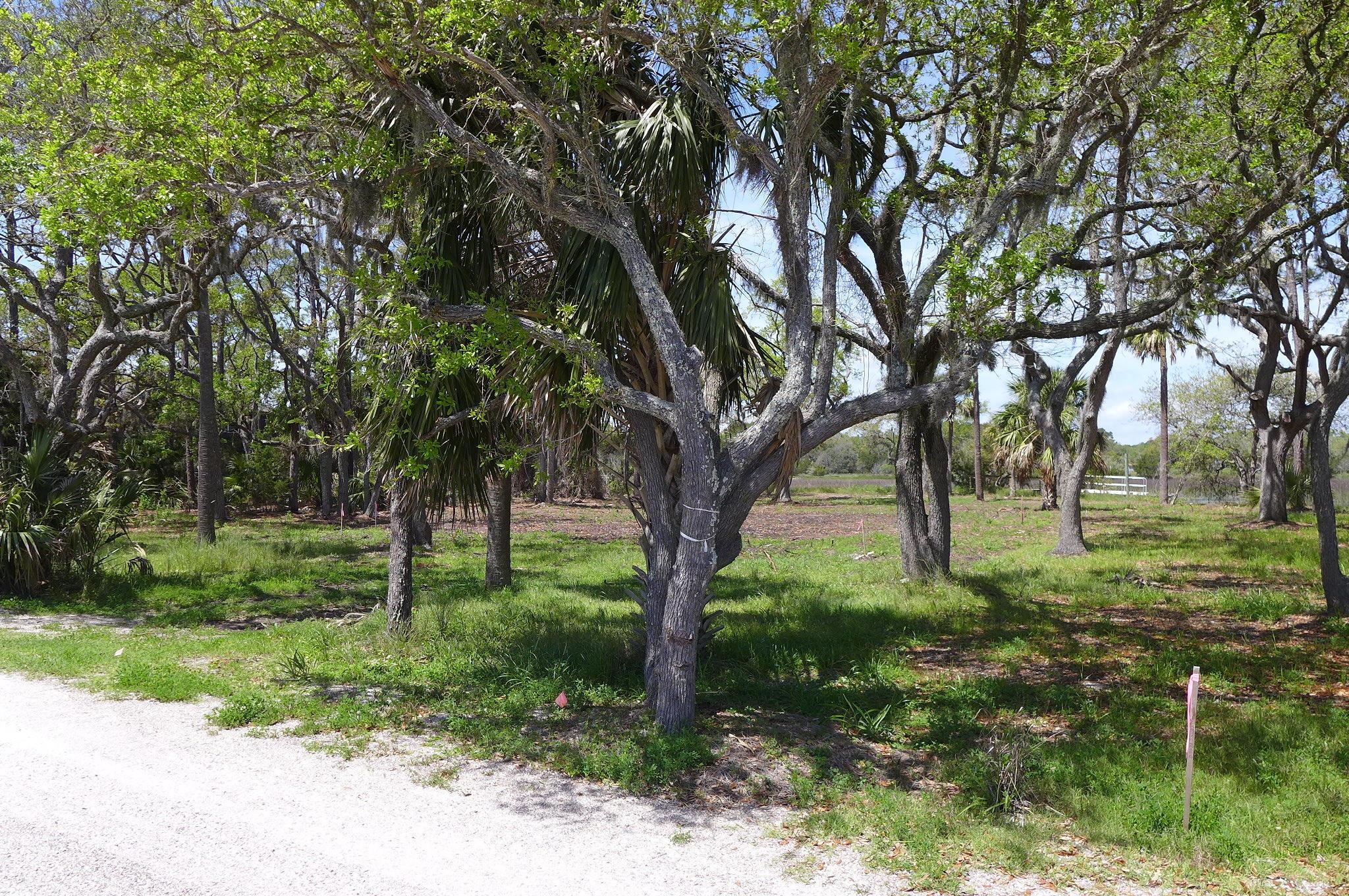 7678 Legare Road Edisto Island, SC 29438