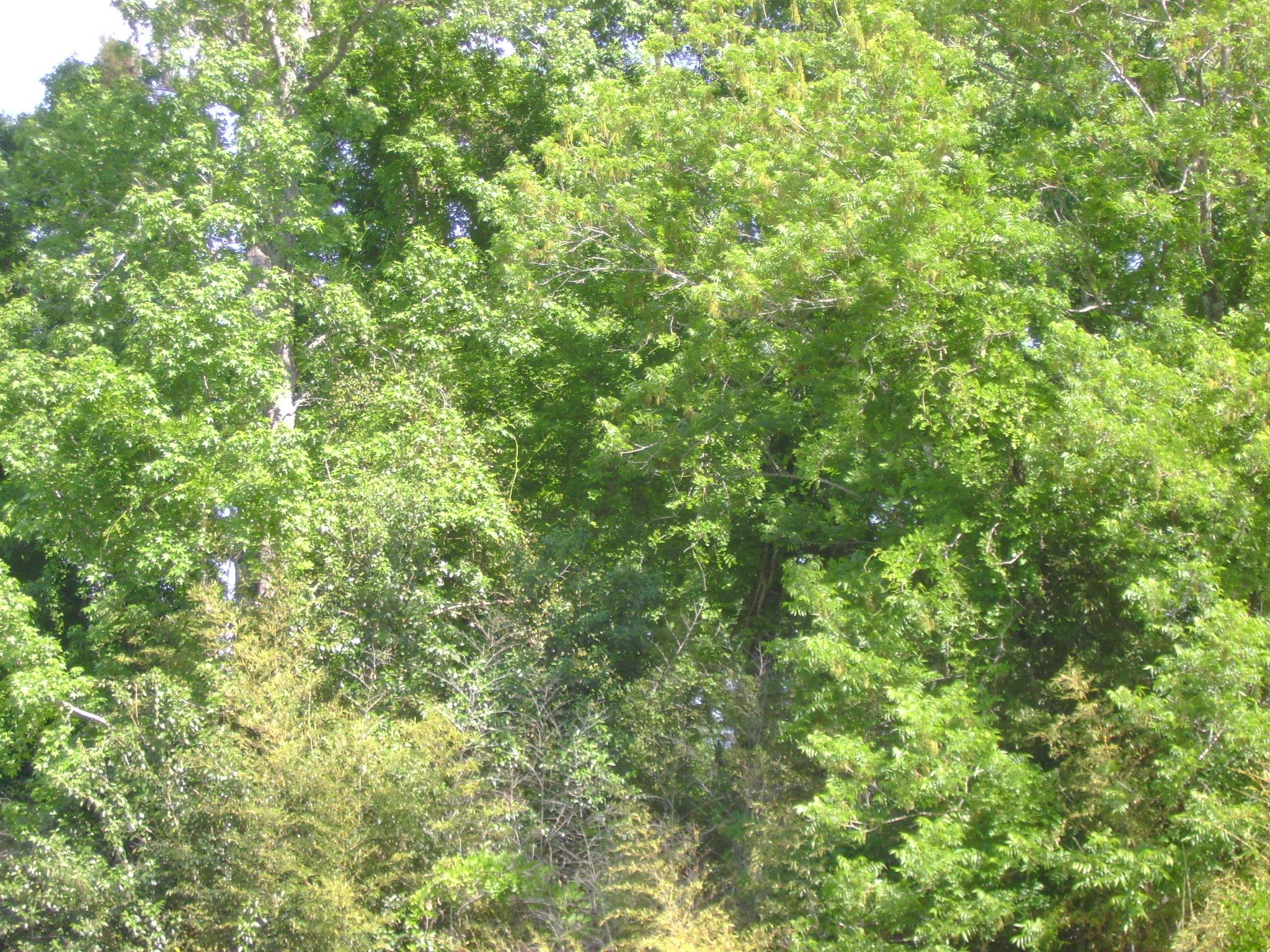 Boxcar Lane Cordesville, SC 29434