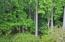 Private Wooded Lot & Wetlands