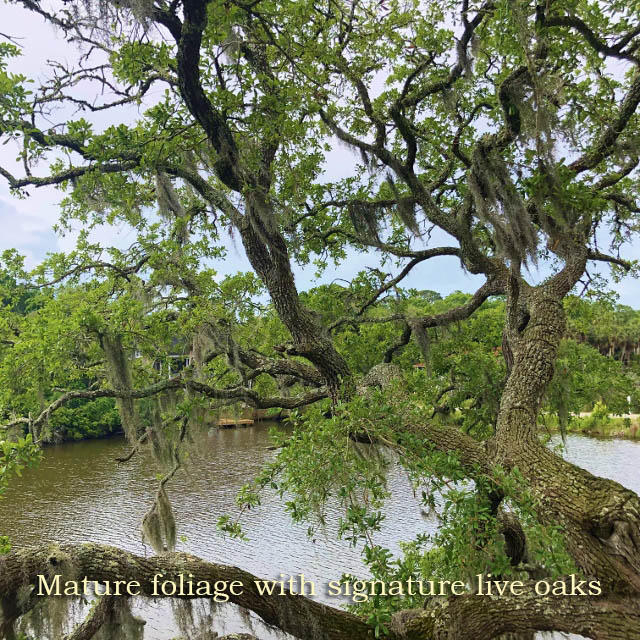 714 Jungle Road Edisto Island, SC 29438