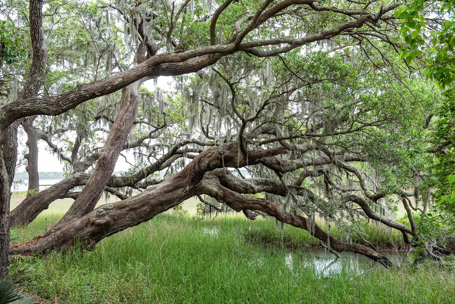 130 #3109 River Landing Charleston, Sc 29492