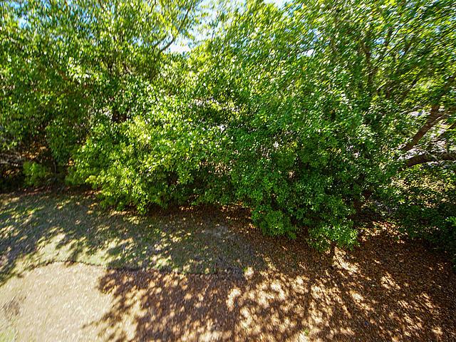 Park West Homes For Sale - 3564 Bagley, Mount Pleasant, SC - 30