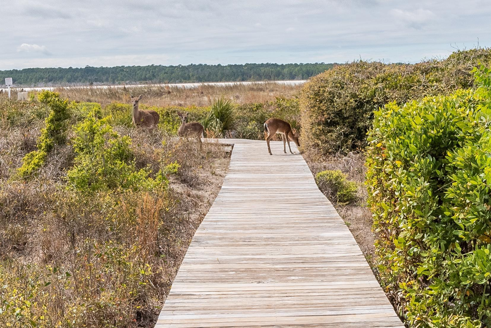 1341 Pelican Watch Villa Seabrook Island, SC 29455