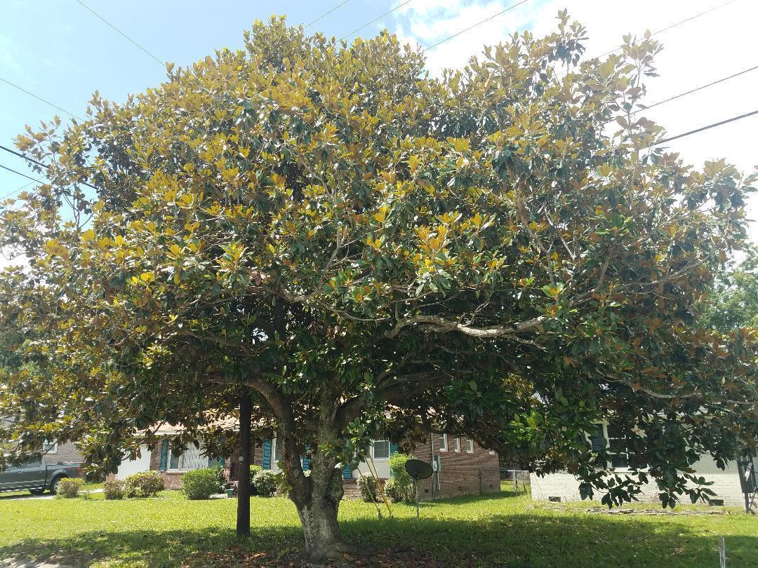 1217 Silver Leaf Circle Charleston, SC 29412