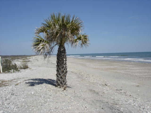 6 Lost Village Trail Edisto Island, SC 29438