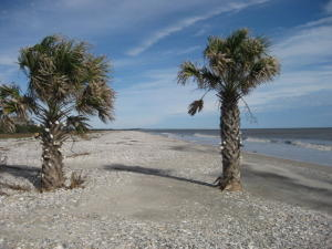 24 Planters Retreat Edisto Island, SC 29438